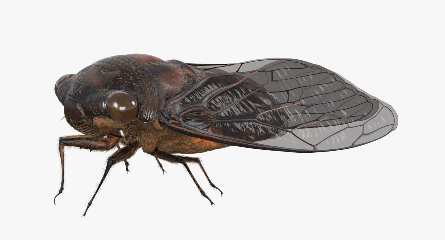 3D cicada