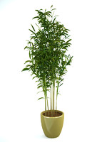 bamboo 1 3D model