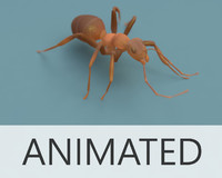 ant animated