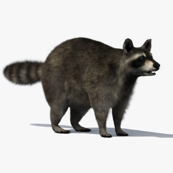 3D raccoon fur
