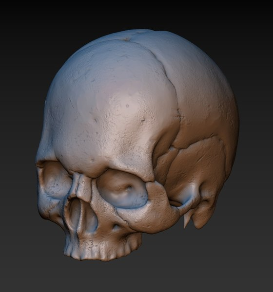 3D skull lower jaw model