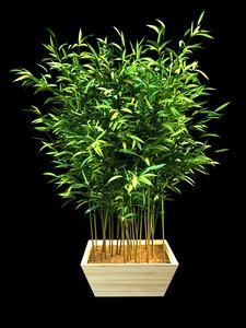 bamboo interior landscape 3D model