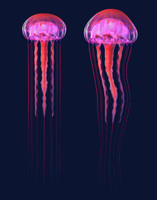 3D jellyfish jelly fish