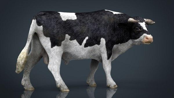 holstein bull 3D model