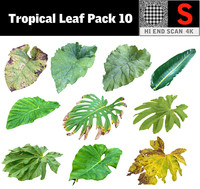 3D tropical leaf pack 10