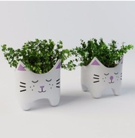 Plant with cat vases