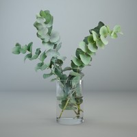 Eucalyptus in a glass vase