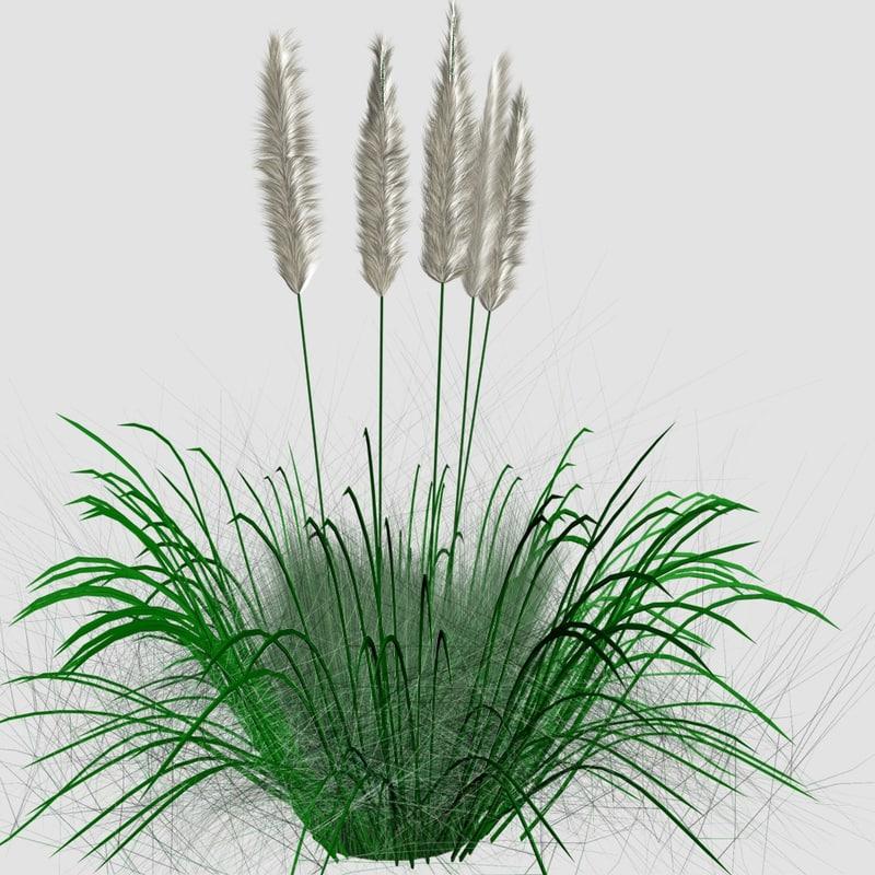 3D ornamental tall grass model