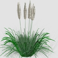 3D ornamental tall grass model