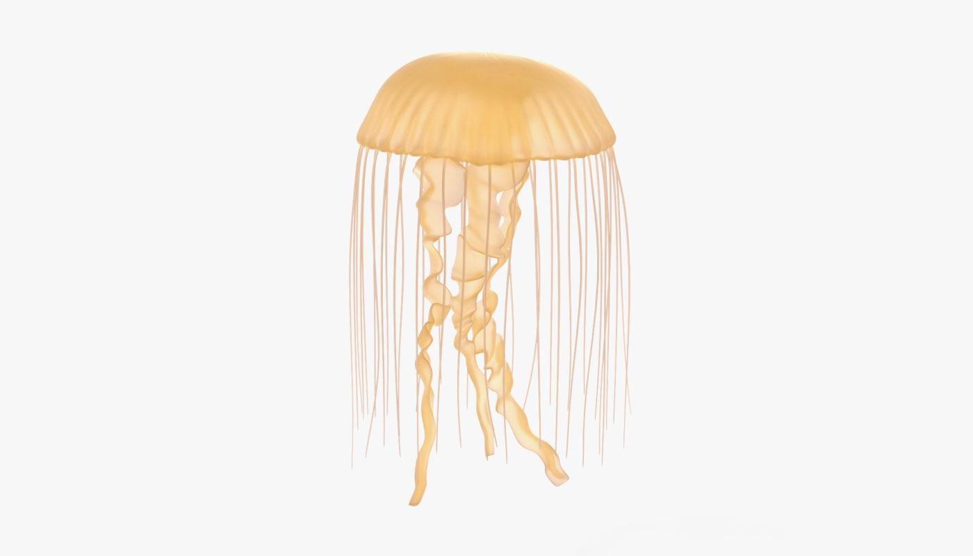 jellyfish underwater 3D