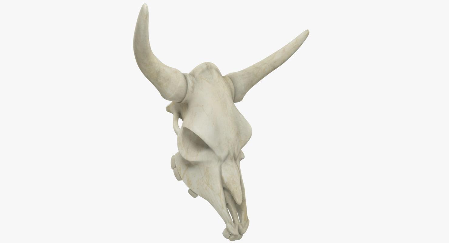 bison skull 3D