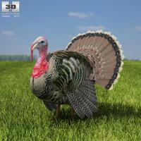3D turkey model