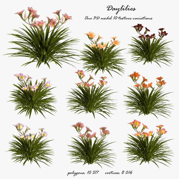 3D daylilies flower