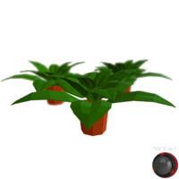 Generic House Plant