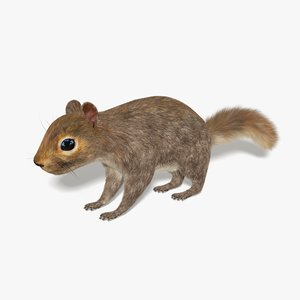 3D model squirrel fur