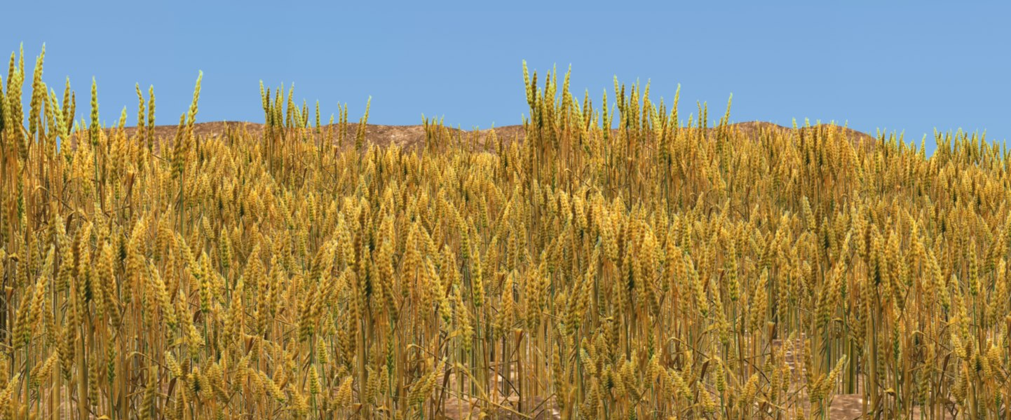 3D golden wheat field