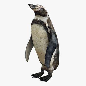 3D realistic penguin