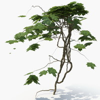 plant wall 3D model