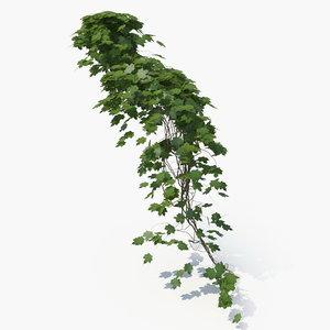 realistic plant 3D model