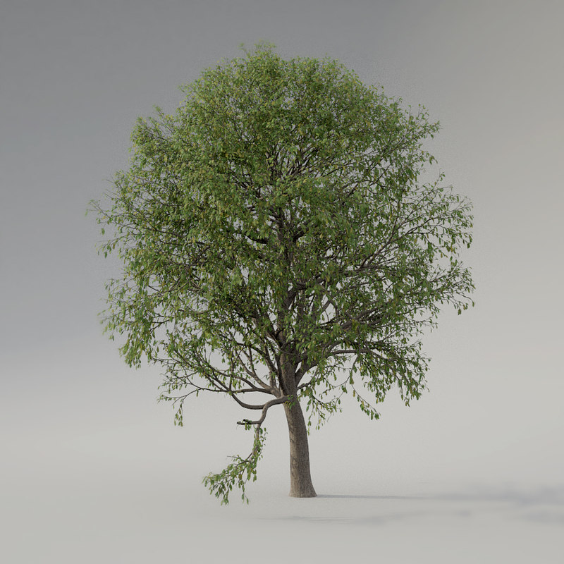 oak tree animation 3D model