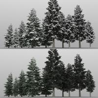 10+10 Cedar Trees