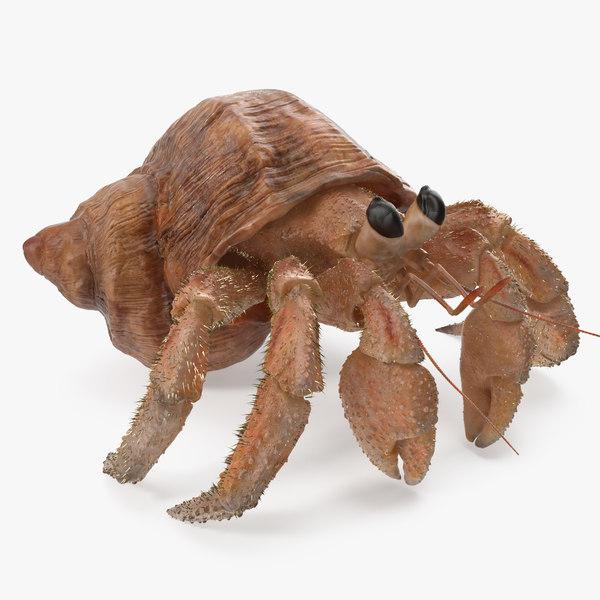 hermit crab fur 3D model