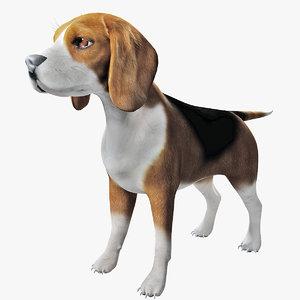3D beagle modeled model