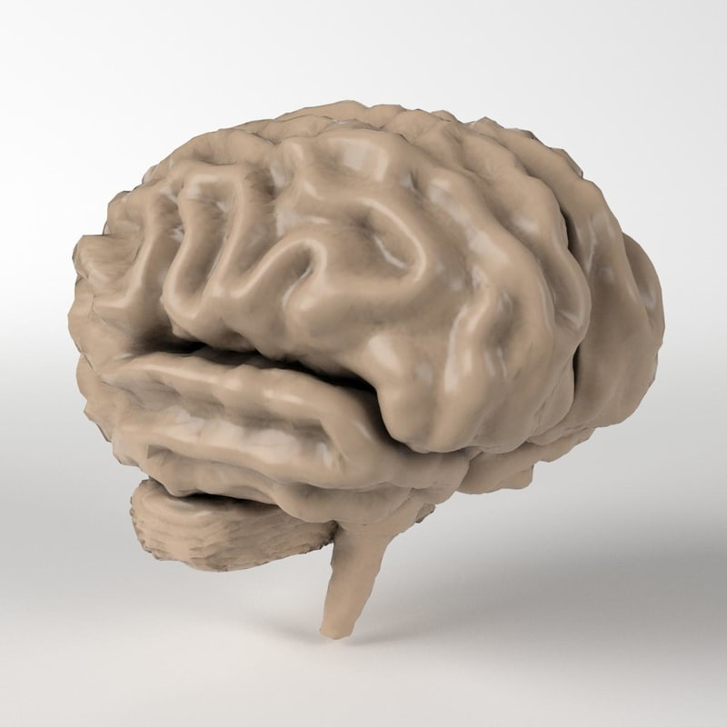 how to make a 3d model of a human brain