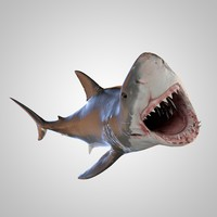 realistic rigged great white model