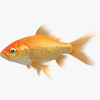 goldfish animation model