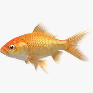 goldfish animation model