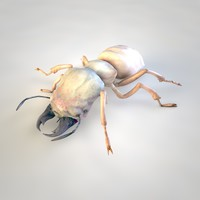 3D rigged termite isoptera