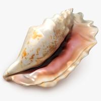 3D sea shell 1 model