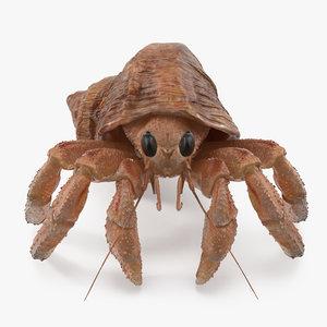 3D hermit crab
