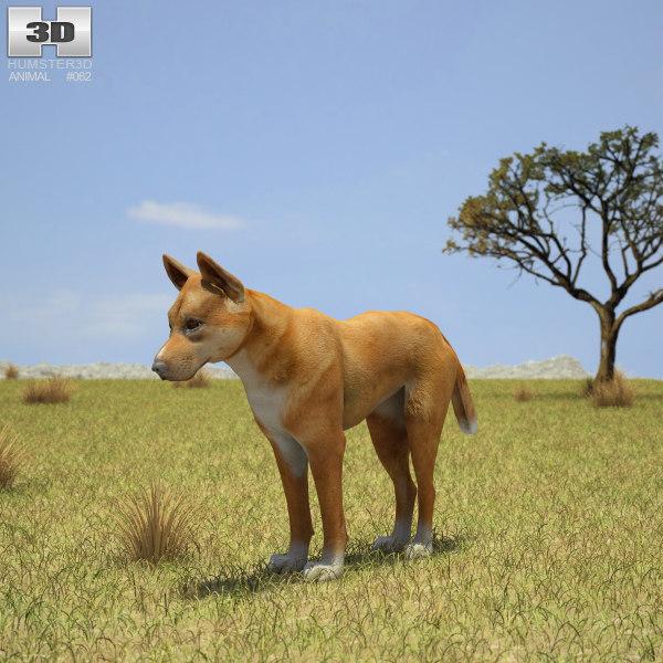 dingo 3D model