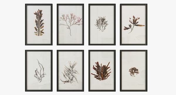 marine flora pressing 3D