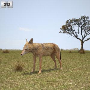 jackal golden model