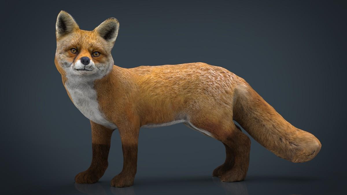 3D hd fox
