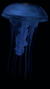 jellyfish glowing tentacles 3D