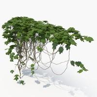 3D realistic ivy