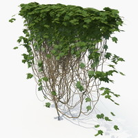 realistic ivy wall model