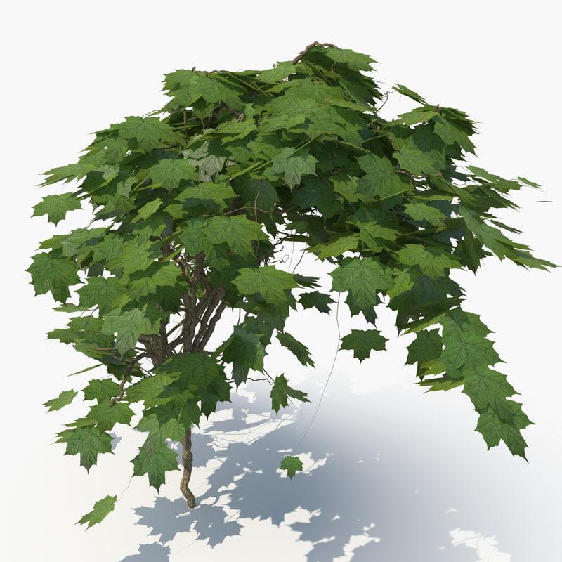 realistic ivy 3D