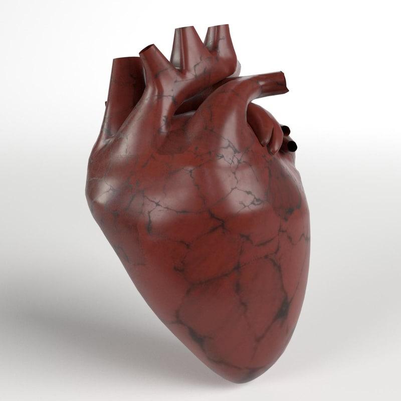 3D human heart model