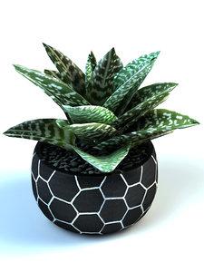 3D model tiger aloe pot