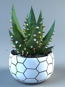 aloe ferox 3D model