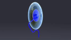 3D plasmodium