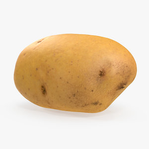 raw potato 3D model