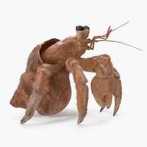 3D hermit crab standing pose