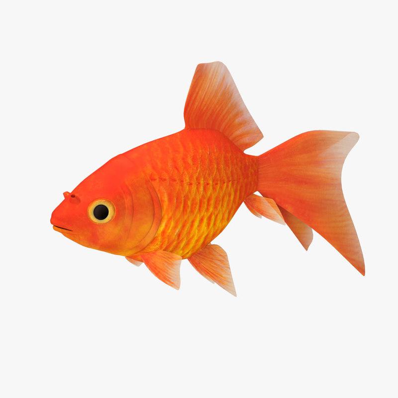 3D gold fish v2 model