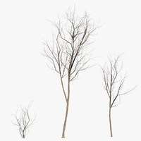 winter trees game-ready